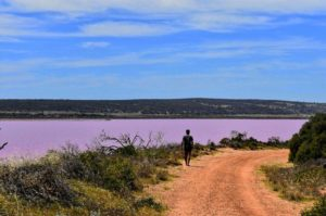 Vas manejando y de repente  Pink Lake,  . . . #pinklake #roadtrip #wa #westernaustralia #australia #justanotherdayinWA #bloggerlife #blog #blogger #instagram #instaphoto #instagramer #instatravel #travel #traveller #traveling #travelingram #travelingtheworld #travelingaroundtheworld #backpacker #backpackerlife #livingthedream #nomade #nomad #nomadlife #unavueltaporeluniverso