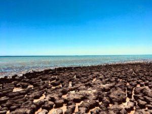 ☀️ Hamelin Pool,  . . . #hamelinpool #sharkbay #wa #westernaustralia #justanotherdayinWA #australia #instagram #roadtrip #instaphoto #instagramer #instatravel #travel #traveller #traveling #travelblog #blog #blogger #bloggerlife #livingthedream #backpacker #backpackerlife #nomad #nomade #nomadlife #vidanomade #unavueltaporeluniverso
