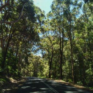 Los bosques de Margaret ❤️ .  Margaret River,  . . #margaretriver #road #landscape #southwest #wa #westernaustralia #australia #instagram #instaphoto #instatravel #travel #traveller #traveling #backpacker #backpackerlife #nomad #nomade #nomadlife #vidanomade #unavueltaporeluniverso