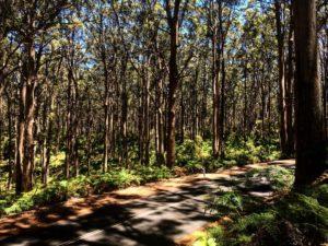 Vas manejando por Margaret y ♂️❤️ . .  Margaret River,  . . #margaretriver #cavesroad #road #landscape #southwest #wa #westernaustralia #australia #instagram #instaphoto #instatravel #travel #traveller #traveling #backpacker #backpackerlife #nomad #nomade #nomadlife #vidanomade #unavueltaporeluniverso