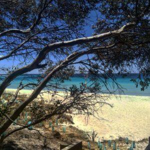 Rincones paradisiacos en medio de un grandisimo paraiso   .  Eagle Bay,  . . . . #lacomuviajera #unavueltaporeluniverso #eaglebay #margaretriver #freelance #southwest #wa #westernaustralia #australia #instagram #instatravel #travel #traveler #traveling #travelingram #livingthedream #nomad #nomadlife #backpacker #backpackerlife #mochilero #vidanomade